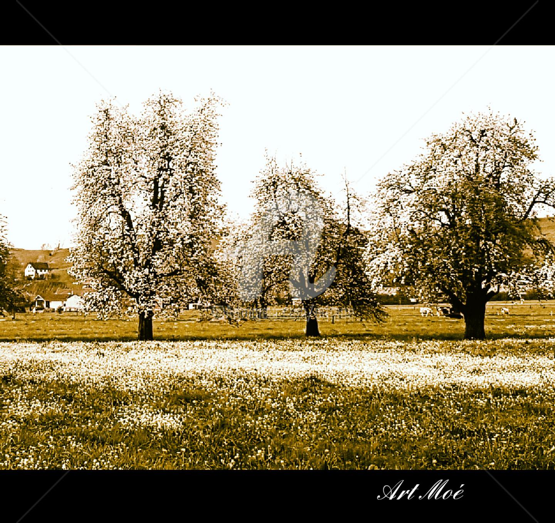 Art Moé - Trees Primetime