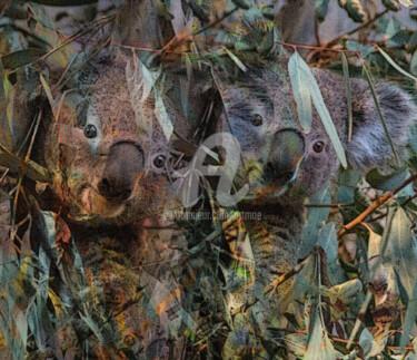 Mikey Koala