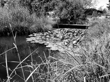 Teich Seerosen