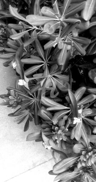 Natura Beauty in black&white